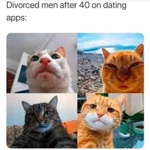 funny meme of cats that is making fun of older divorced men who go on tinder for the first time. Thisis because a lot of men have no idea how to take the right kind of photo and end up looking like this.